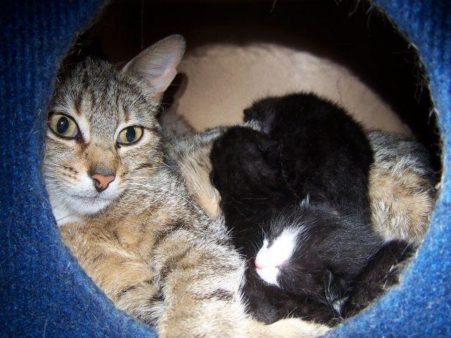 Jade and her babies