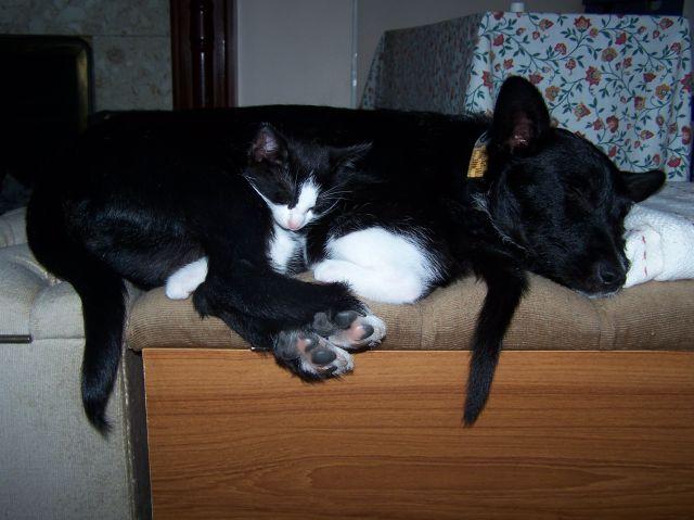 Oskar and Jasper