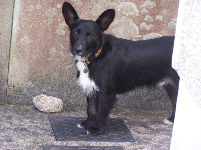Jasper 2007