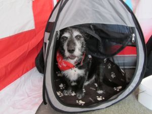 I can hides in my tent if I get fed up or scareds