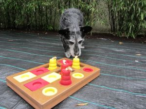 A puzzle game is a great way to give your sick doggie somethings to do with their brain!