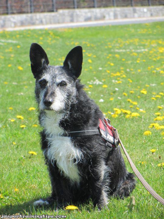#35 - Keep your doggies safe! (4/4)