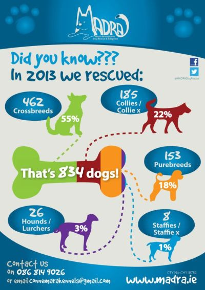 This is how many doggies MADRA rescued last year - lots!