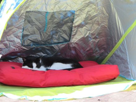 The humans had this funny idea I'd want to sleep in the shade in this silly tent, but I let Oskar haves it instead!