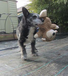 I'll show that teddy!