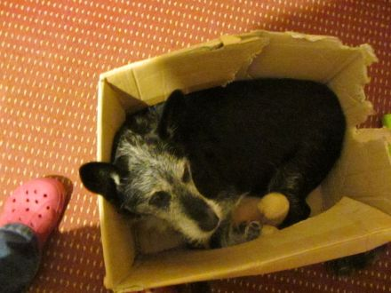 Save a poor doggie from having to sleep in a carboard box!