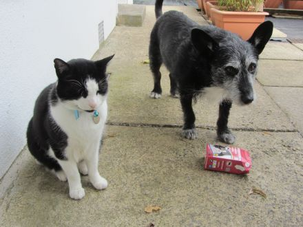 Just remembereds that there's no cat food packets to lick out if there's no cats!