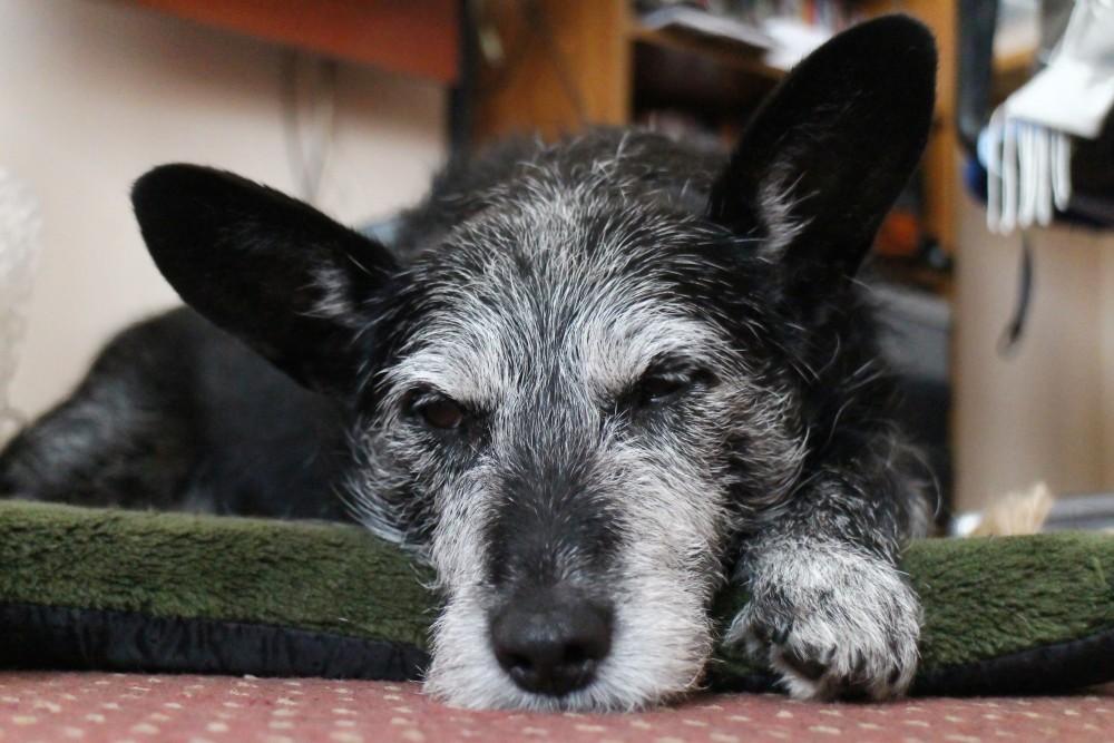 #73 - Shameful neglect of doggie! (1/6)