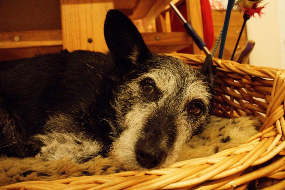 #73 - Shameful neglect of doggie! (5/6)