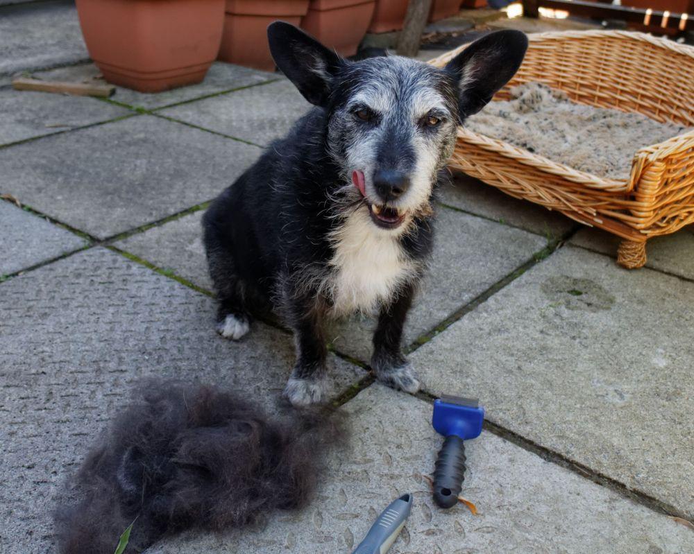 #73 - Shameful neglect of doggie! (4/6)