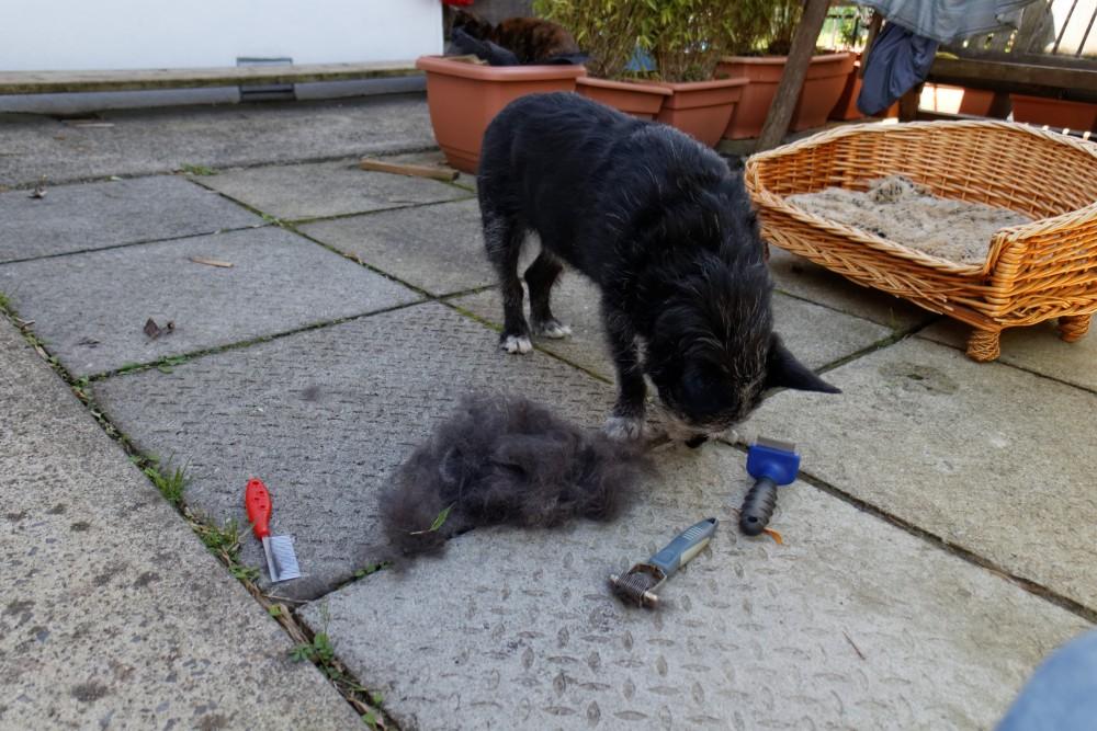 #73 - Shameful neglect of doggie! (2/6)