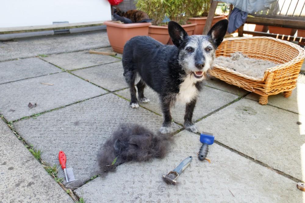 #73 - Shameful neglect of doggie! (3/6)